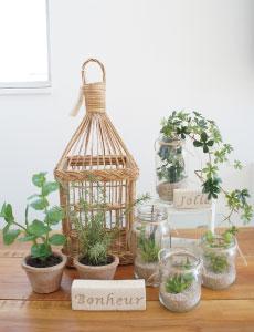 脱臭・調湿機能を持つ土を使用した観葉植物もご提案しています!