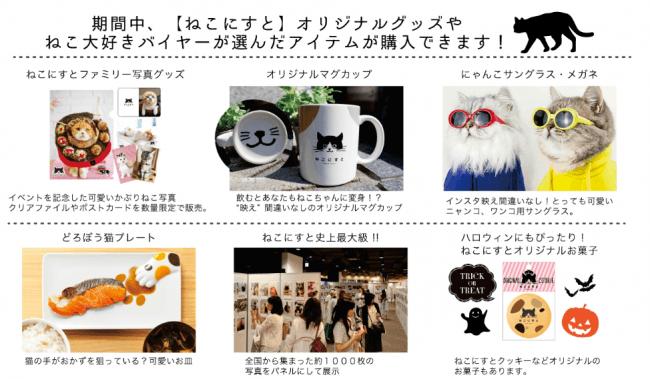 に す と ねこ 猫ブログ 人気ブログランキングとブログ検索
