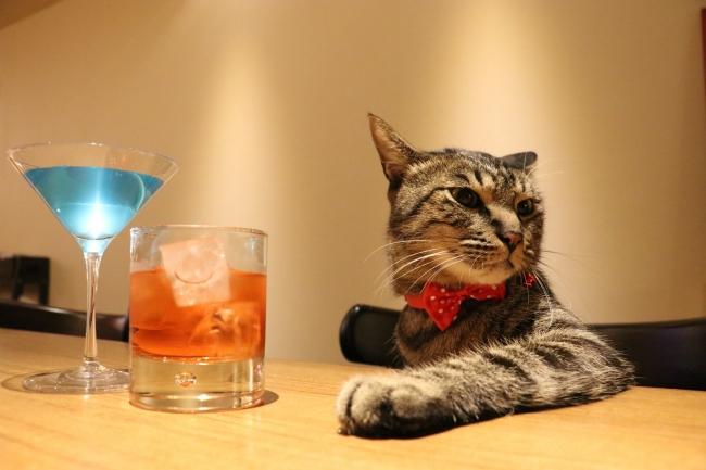 猫店長大吉  @daikichi_the_cat