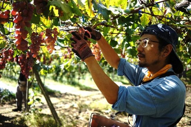 山梨県峡東地区:甲州ワイン