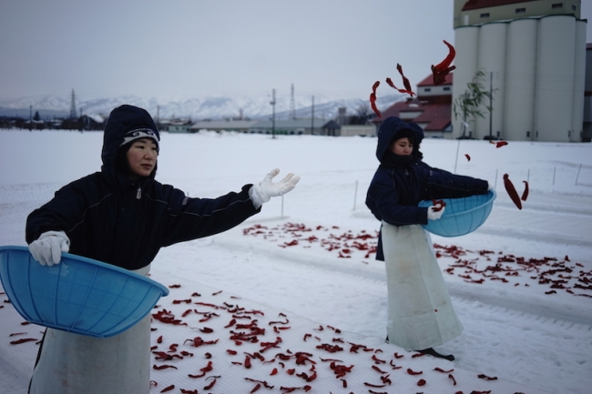 新潟(妙高)「かんずり」大寒の日の特別な雪晒し