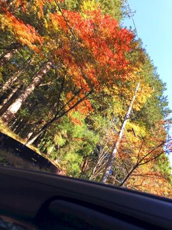 屋根を開ければ紅葉も眼の前!