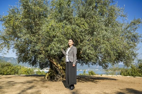 「樹齢千年のオリーヴ大樹」と石川さゆりさん