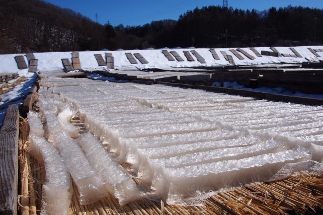 天日干しのために田んぼに広げられた寒天。