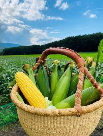 野菜のイメージ(トウモロコシ)