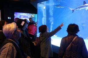 水族館内の様子