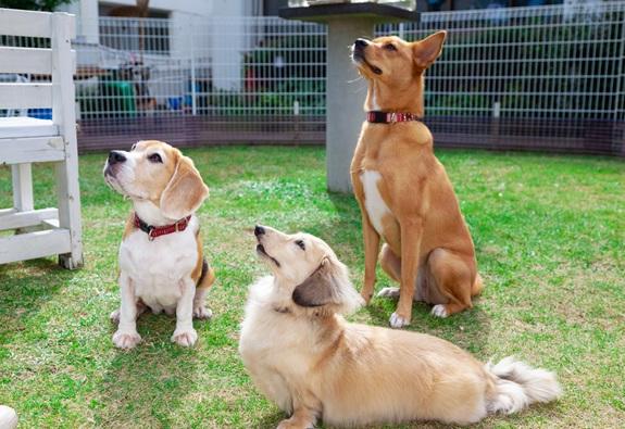 先輩社員 左からソフィ、ルル、ターチ