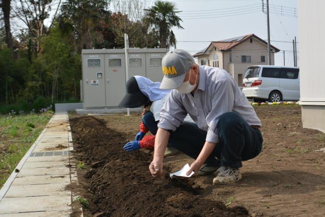 ふじおか幼稚園の取り組みとして、保護者、地域ボランティアの皆様が敷地内にある畑を管理してくださっています。