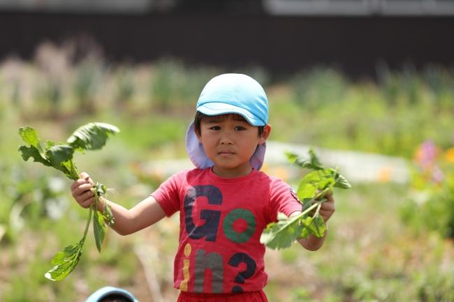 地域のボランティアの方々と、園内の畑で一緒に育てた野菜を収穫しました。