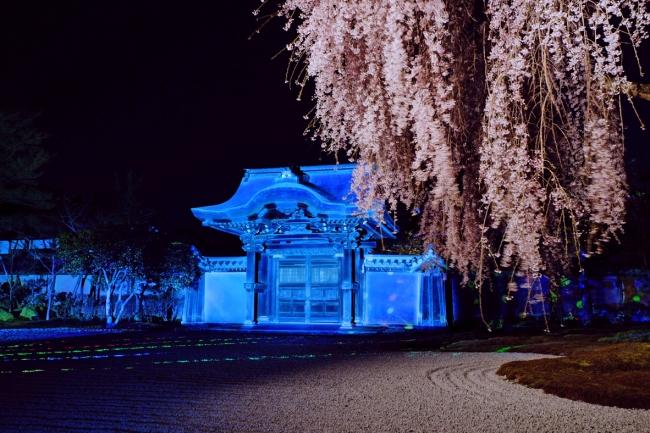 しだれ桜とライトアップ