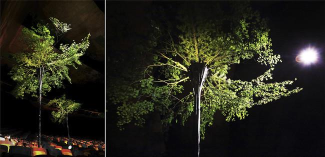 日本の山を守る広葉樹を使用した作品 photo_Yamato Ikehara