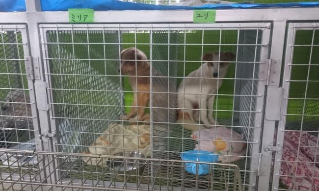 小型の犬は間にパテーションを入れて、 2頭収容できる大きさです。