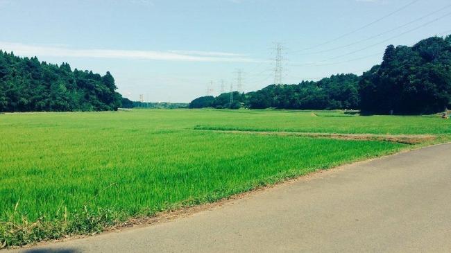 千葉県佐倉市(町田萌 撮影・加工)