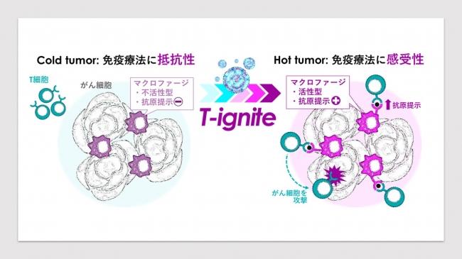 T-igniteは Cold tumorをHot tumorに変換してがんを治りやすくする最新技術です
