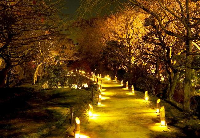 竹灯籠が灯る散策路(昨年の様子)