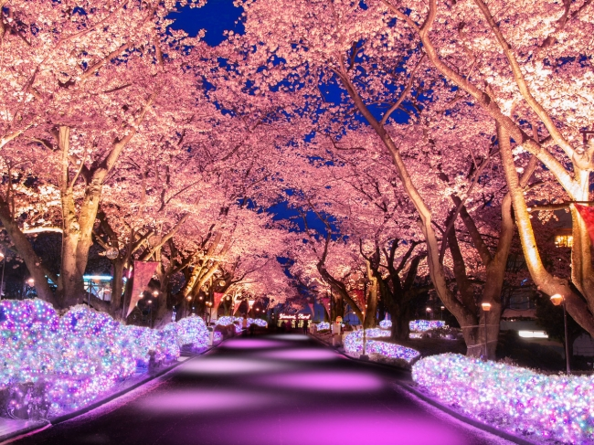 「桜並木ライトアップイメージ」