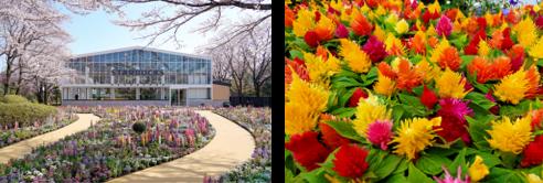 (左)貸出画像「四季の庭」 ※写真は春の様子/(右)貸出画像「ケイトウ」