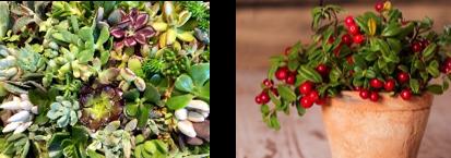 (左)貸出画像「多肉植物」/(右)貸出画像「コケモモ」