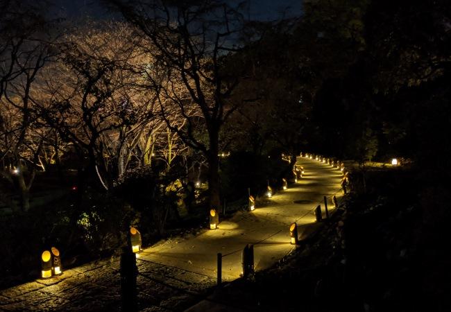 貸出画像「竹あかりが灯る散策路」