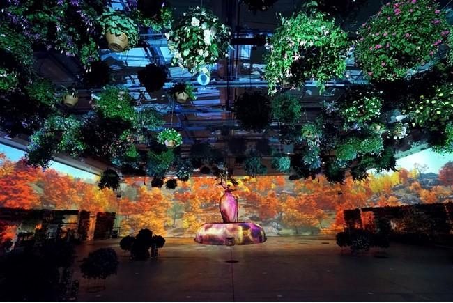 花とデジタルのアートショー~色づく紅葉と冬の花景色~