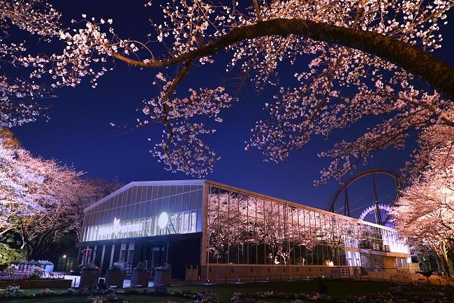 貸出画像「夜桜びより1.」