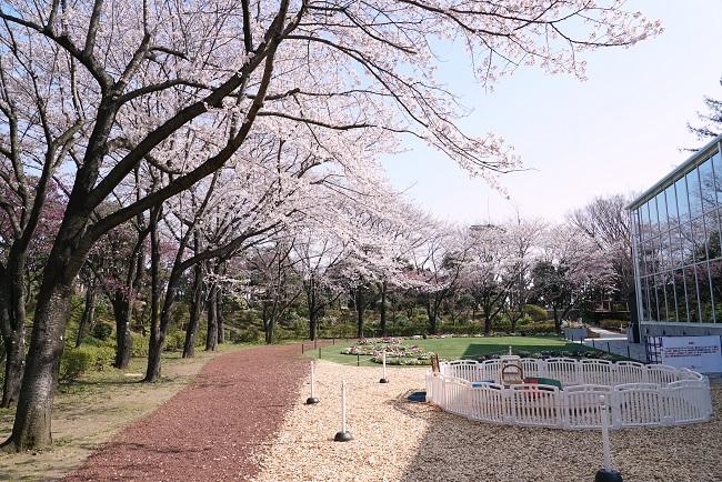 貸出画像 「HANA・BIYORIの桜」