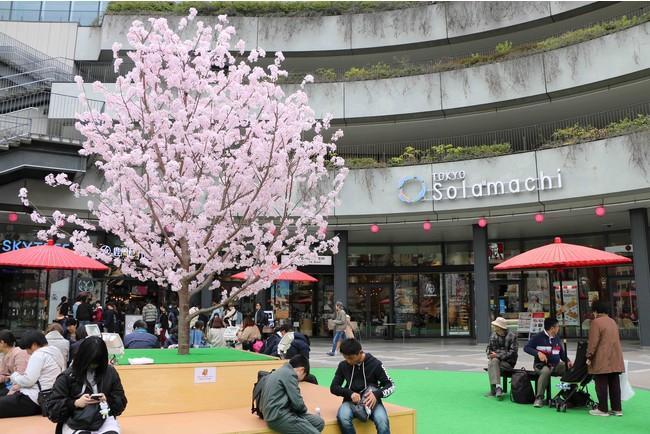 ソラマチさくらまつり(過去の様子)(C)TOKYO-SKYTREETOWN