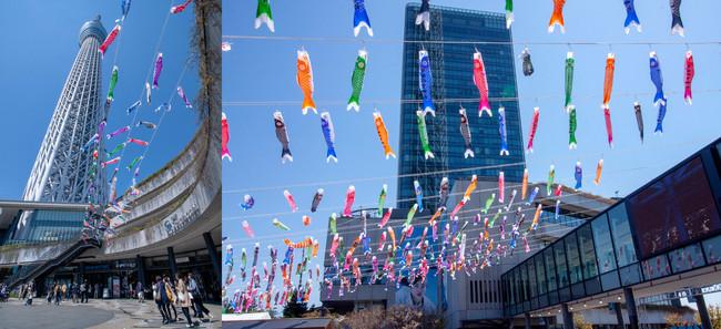 こいのぼりフェスティバル(過去の様子) ©TOKYO-SKYTREETOWN