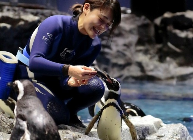 すみだ水族館の人気者「ペンギン」