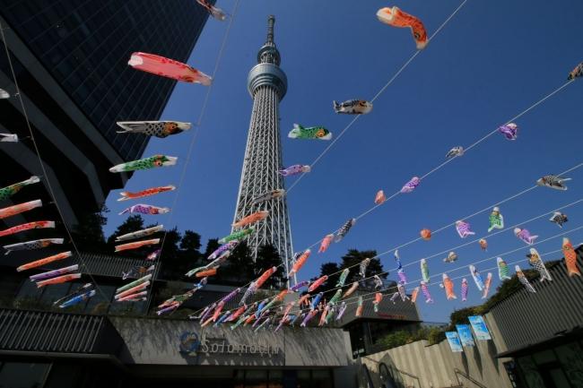 東京スカイツリータウン(R) こいのぼりフェスティバル(昨年の様子)(C)TOKYO-SKYTREETOWN