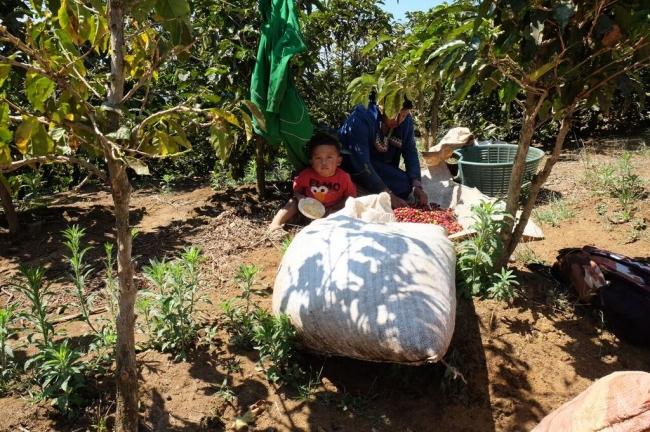農園を切り盛りする家族