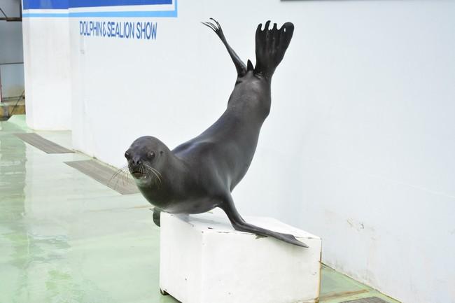 品川 水族館 コロナ