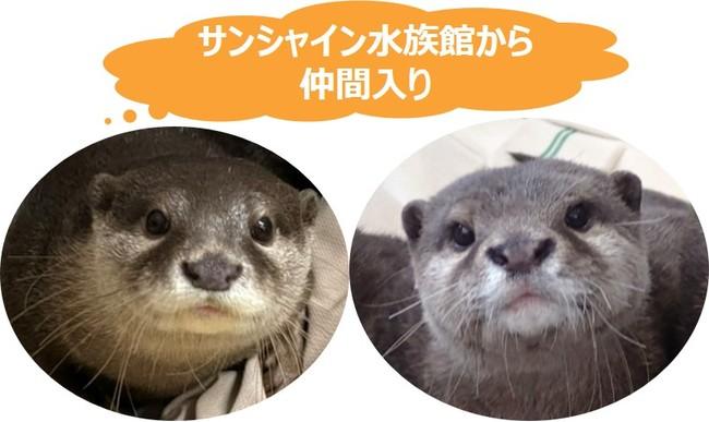 (左)ニコ、(右)シュラ