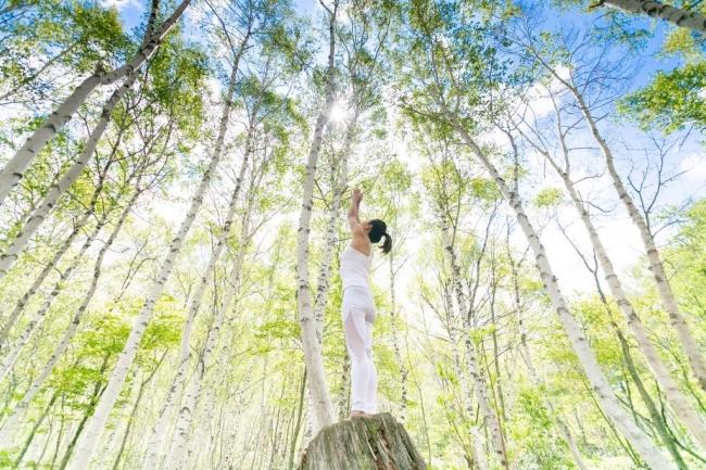 美しい白樺林で心と体を癒す