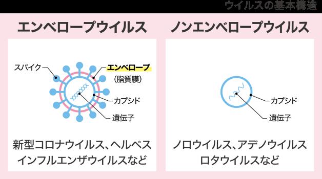 ウイルスの基本構造