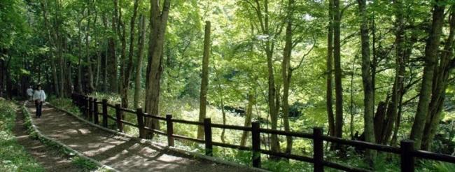 KAMUY LUMINAのコースとなるボッケの森遊歩道