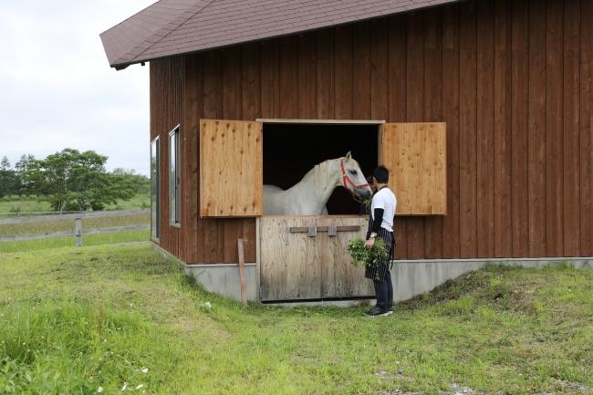 ※実際に暮らす馬は、ポニーまたは仔馬になります。