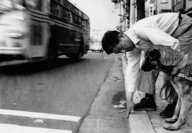 車道と歩道の段差を候補犬に教えている塩屋賢一
