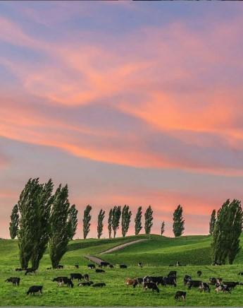 ワイカト地方の美しい夕暮れ