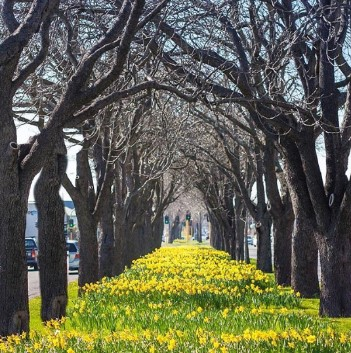 春先の市内の公園