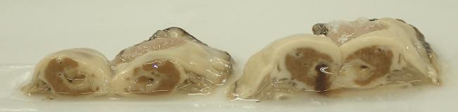 左:無給餌のマガキ断面 右:サンショウ微粉末摂餌マガキ断面(腸管から漏出)