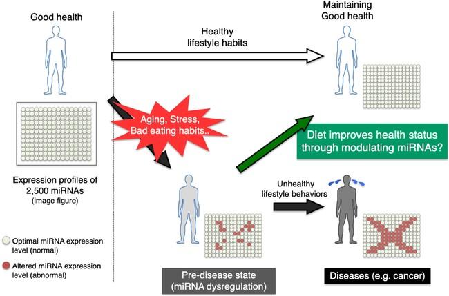 図解:健康状態とマイクロRNA発現パターンの関係性