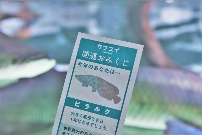 ▲「カワスイ 開運おみくじ」イメージ
