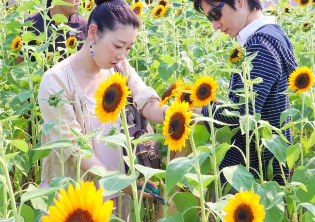 花摘み体験の様子