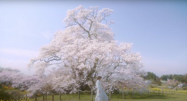 福島・塩ノ崎大桜