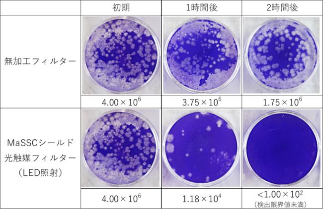 ※白く色が抜けている部分が新型コロナウイルスが細胞に感染した箇所