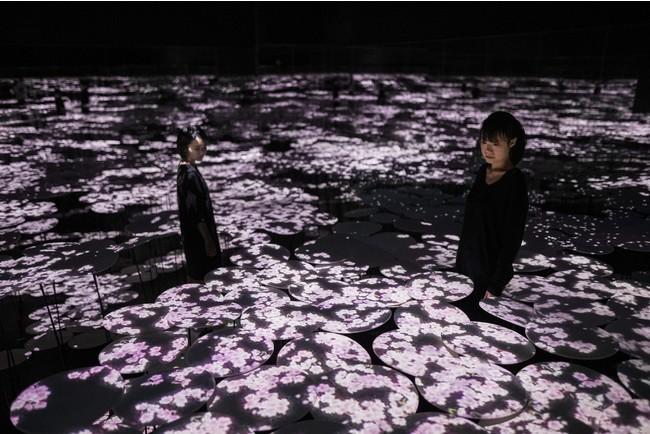 地形の記憶(桜)