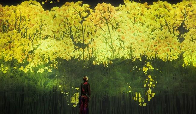 増殖する無量の生命(菜の花)