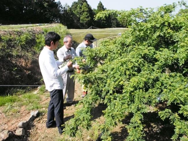 和歌山県海南地区の山椒農家訪問の様子