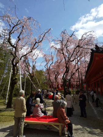 2019年:兵庫県の高齢者施設様 京都お花見ツアーの風景